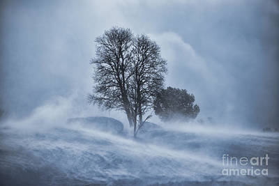 Tree In Snow Blizzard Poster