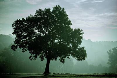 Tree In The Fog Poster by Wladimir Bulgar