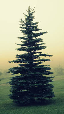 Tree In The Morning Mist Poster