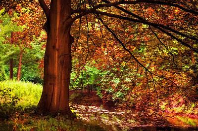 Tree In The Park. De Haar Castle. Utrecht  Poster