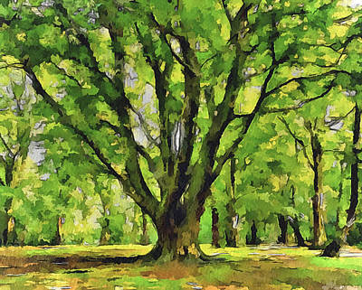 Tree In The Park Poster by Yury Malkov