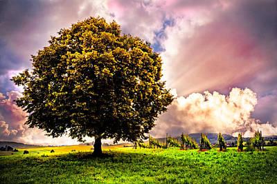 Tree In The Vineyard Poster by Debra and Dave Vanderlaan