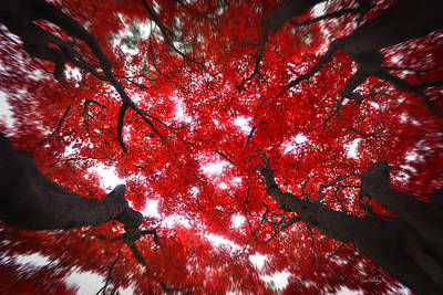 Poster featuring the photograph Tree Light - Maple Leaves Fall Autumn Red by Jon Holiday