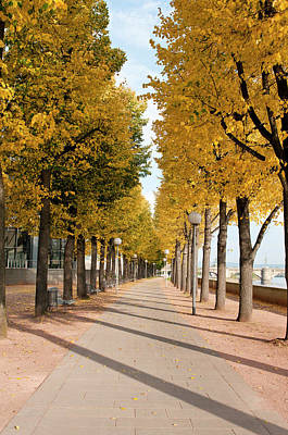 Tree-lined Pathway Along Elbe River Poster by Michael Defreitas