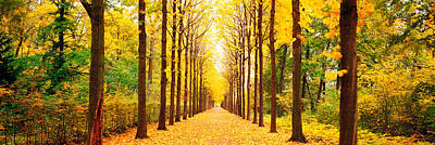 Tree-lined Road Schwetzingen Germany Poster by Panoramic Images