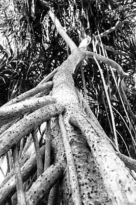 Tree Man Poster by Eyzen M Kim