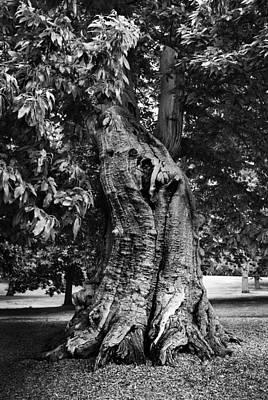 Tree Poster by Mark Rogan