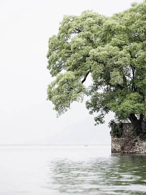 Tree Next To A Lake Poster