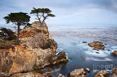 Tree Of Dreams - Lone Cypress Tree At Pebble Beach In Monterey California Poster by Jamie Pham