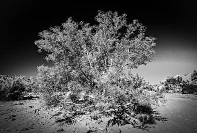 Tree Of The Desert Poster