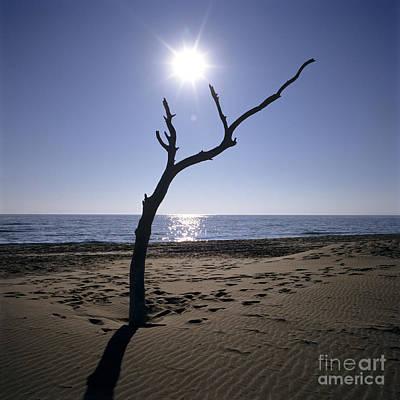 Tree On A Beach Poster by Bernard Jaubert