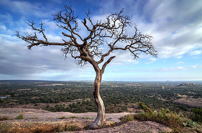 Tree On Enchanted Rock Poster