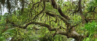 Tree On South Creek In Oscar Scherer Poster