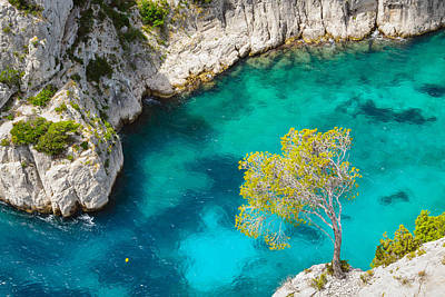 Tree On Turquoise Waters Poster