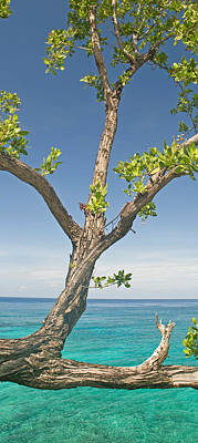 Tree Overhanging Sea At Xtabi Hotel Poster by Panoramic Images
