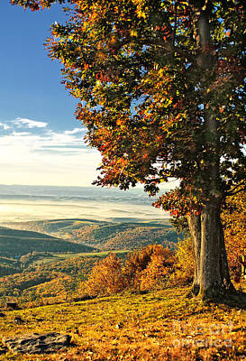 Tree Overlook Vista Landscape Poster by Timothy Flanigan