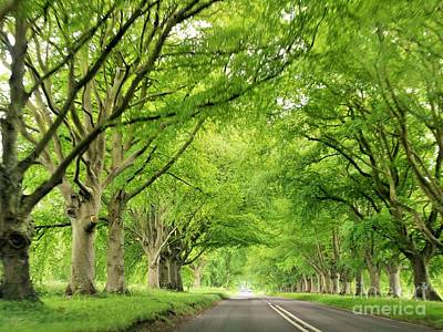Tree Avenue Poster