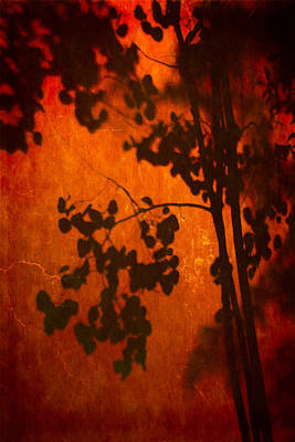 Tree Shadow On Fiery Wall Poster by Dave Garner