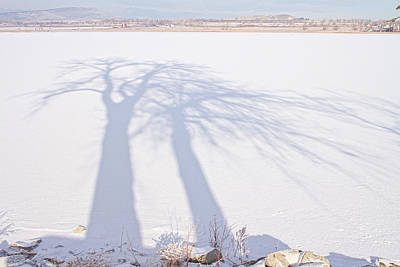 Tree Shadow Puppets Poster