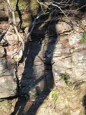 Poster featuring the photograph Tree Shadows by Melissa Stoudt
