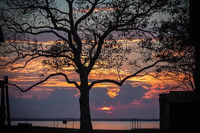 Tree Silhouette Poster by Kristopher Schoenleber