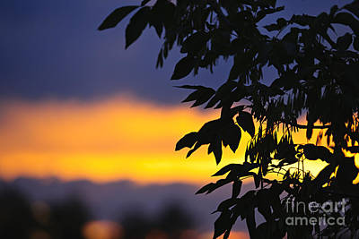 Tree Silhouette Over Sunset Poster