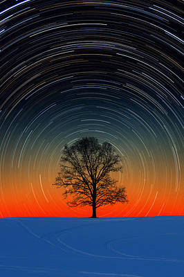Poster featuring the photograph Tree Silhouette With Star Trails by Larry Landolfi