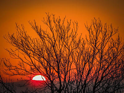 Tree Silhouetted By Irish Sunrise Poster