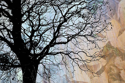 Tree Skeleton Layer Over Opaque Image Poster by Judi Angel