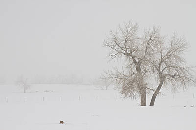 Tree Snow Fog And The Prairie Dog Poster