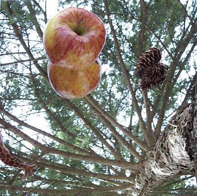 Tree Spiral Poster