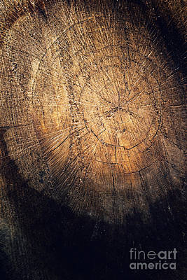 Tree Texture Background Poster by Mythja  Photography
