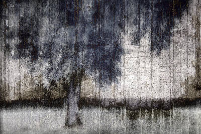 Tree Through Sheer Curtains Poster by Carol Leigh