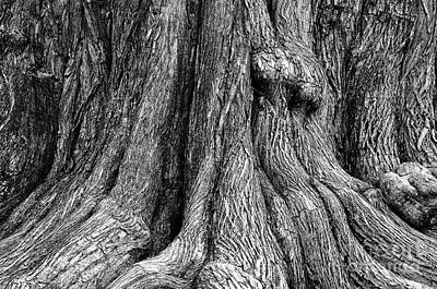 Tree Trunk Closeup Poster