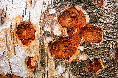 Tree Trunk Closeup - Wooden Structure Poster by Matthias Hauser