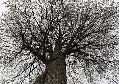 Tree Web Poster