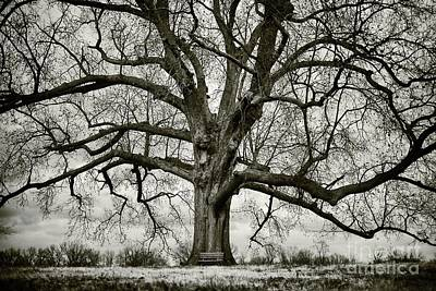 Tree With Bench Poster by Greg Ahrens