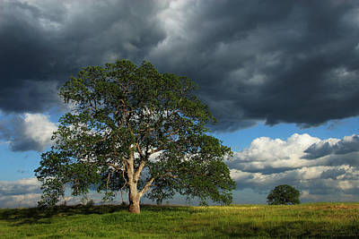 Tree With Storm Clouds Poster