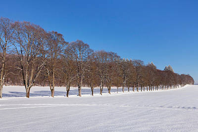 Treelined In A Snow Covered Field Poster by Panoramic Images
