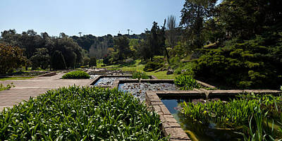 Trees And Aquatic Plants In The Garden Poster by Panoramic Images