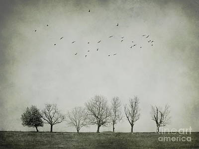 Trees And Birds Poster by Diana Kraleva