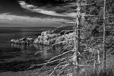Trees And Shoreline Rock Formations In Acadia National Park Poster by Randall Nyhof