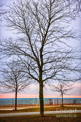 Trees At The Boardwalk In Toronto Poster by Elena Elisseeva