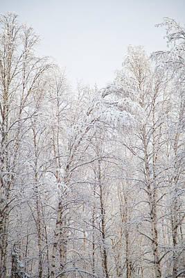 Trees Poster by Dora Miller