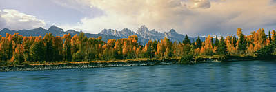 Trees In A Forest Along Snake River Poster by Panoramic Images