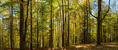 Trees In A Forest, Letchworth State Poster by Panoramic Images