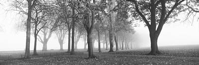 Trees In A Park During Fog, Wandsworth Poster