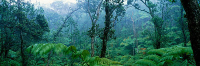 Trees In A Rainforest, Hawaii Volcanoes Poster by Panoramic Images