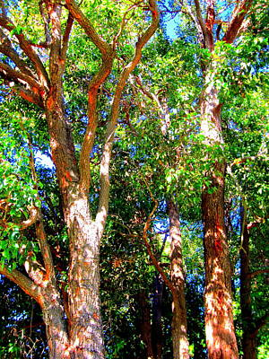 Trees In The Nearby Bush Poster