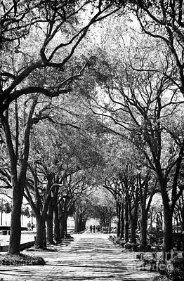 Trees In Waterfront Park Poster